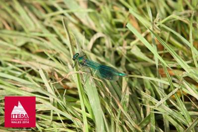 Dragonfly. We did have time to admire the nature