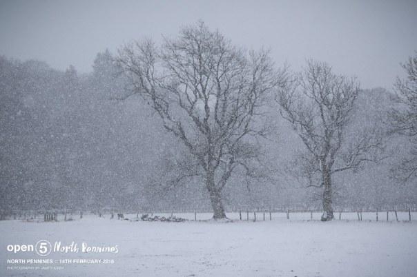 Snowstorm!