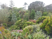 Tresco gardens