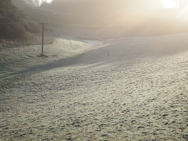 Frost and early morning mists on the race course (Sandy Wallace)