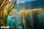 Ötillö swimrun: Isles of Scilly2017