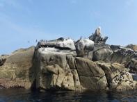 Seabird trip