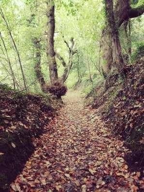 Hollow way??