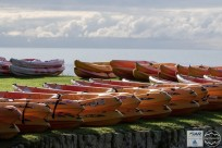 Kayaks lined up for the start. The look so innocent.