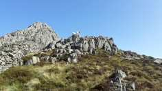 Mountain goats, Tryfan behind